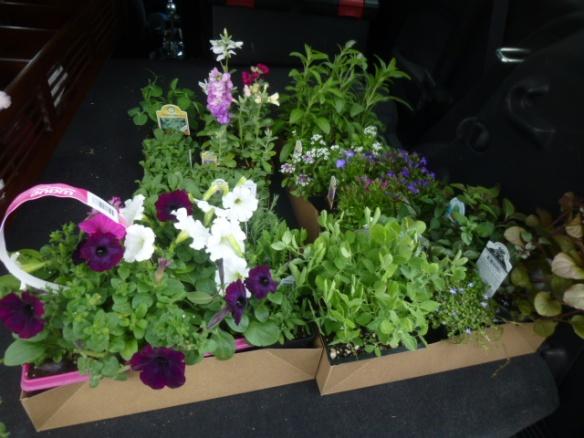 Returning Dead Plants To Home Depot Aj S Trash2treasure Blog